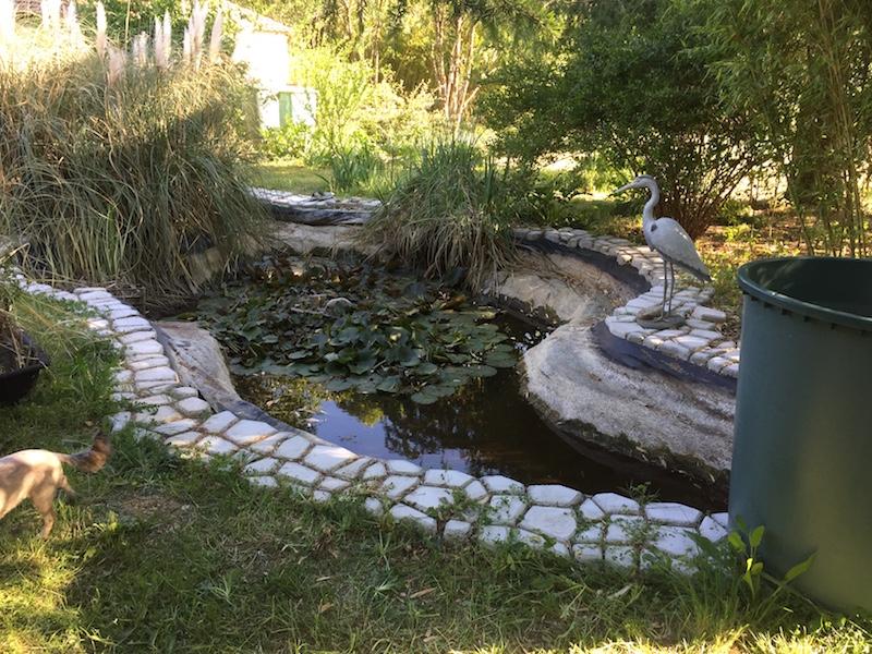 Remise en forme bassin Gard